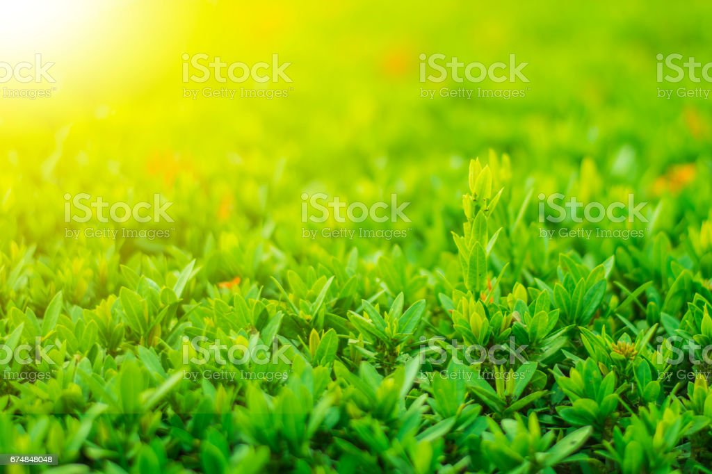 Green leaves of tree in the park stock photo