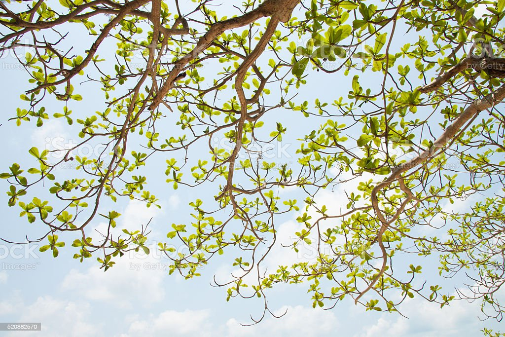 Green leaves on blue sky background royalty-free stock photo