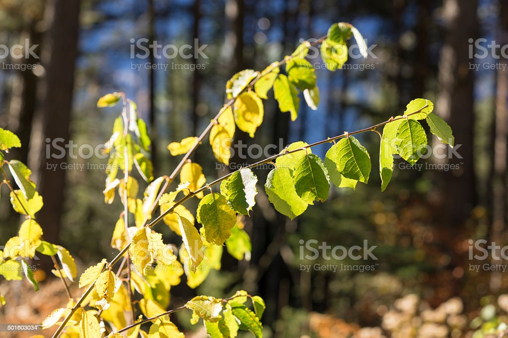 Green Leaves on Branches in Bright Sunlight stock photo