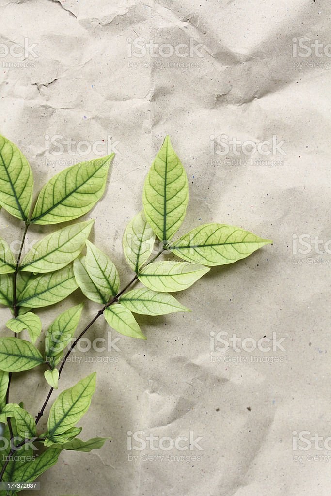 Green Leaves on recycle paper royalty-free stock photo