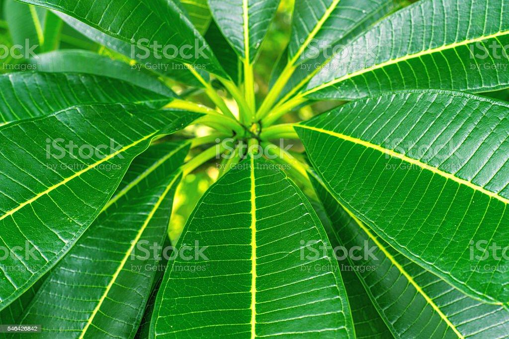 Vert feuilles sur l'arbre photo libre de droits