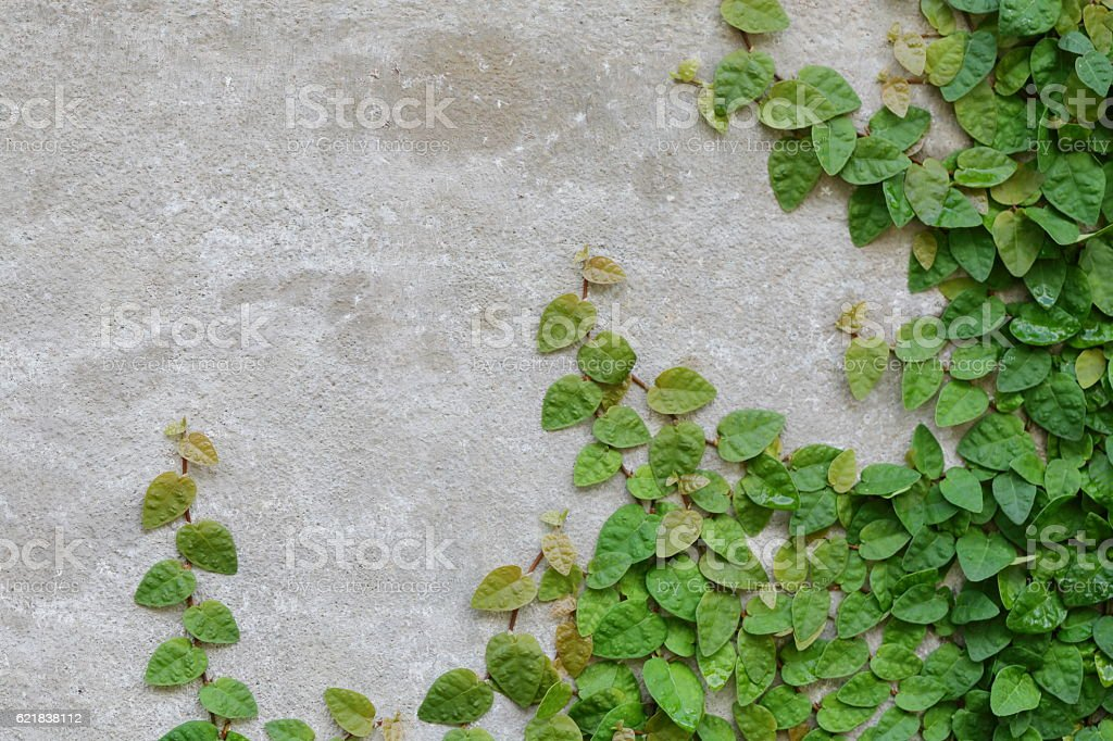 Green leaves on wall background. stock photo