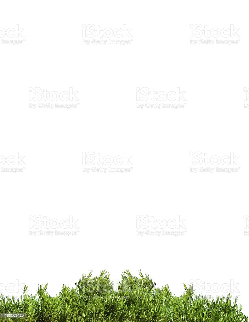 Green leaves on  white  paper background royalty-free stock photo