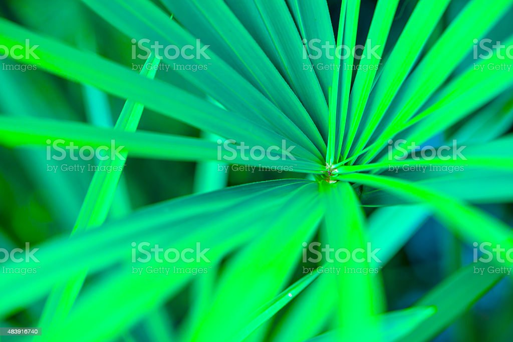 Green leaves, palm tree stock photo
