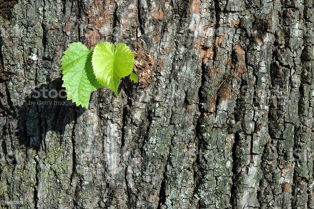 Green leaves (Horizontal) stock photo