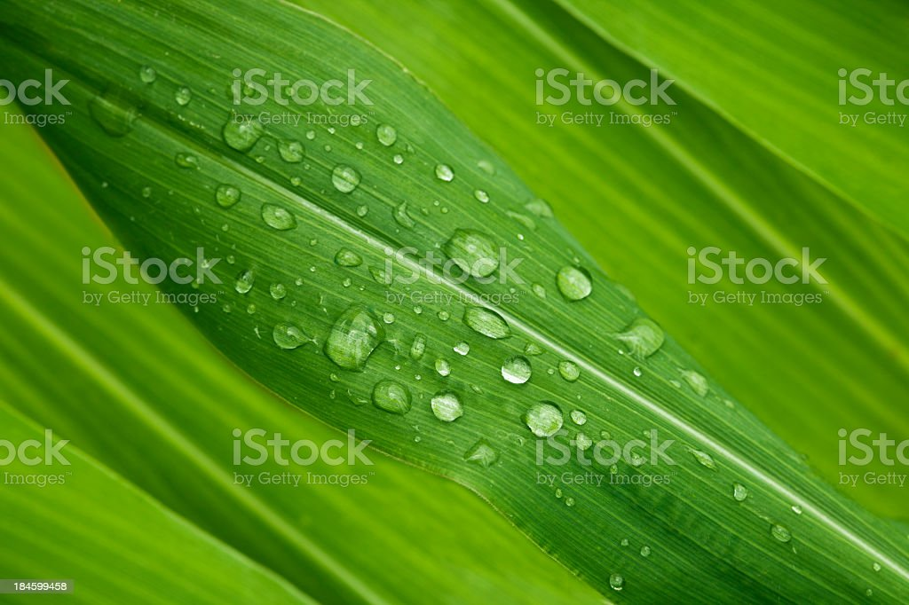 Green leaves stock photo