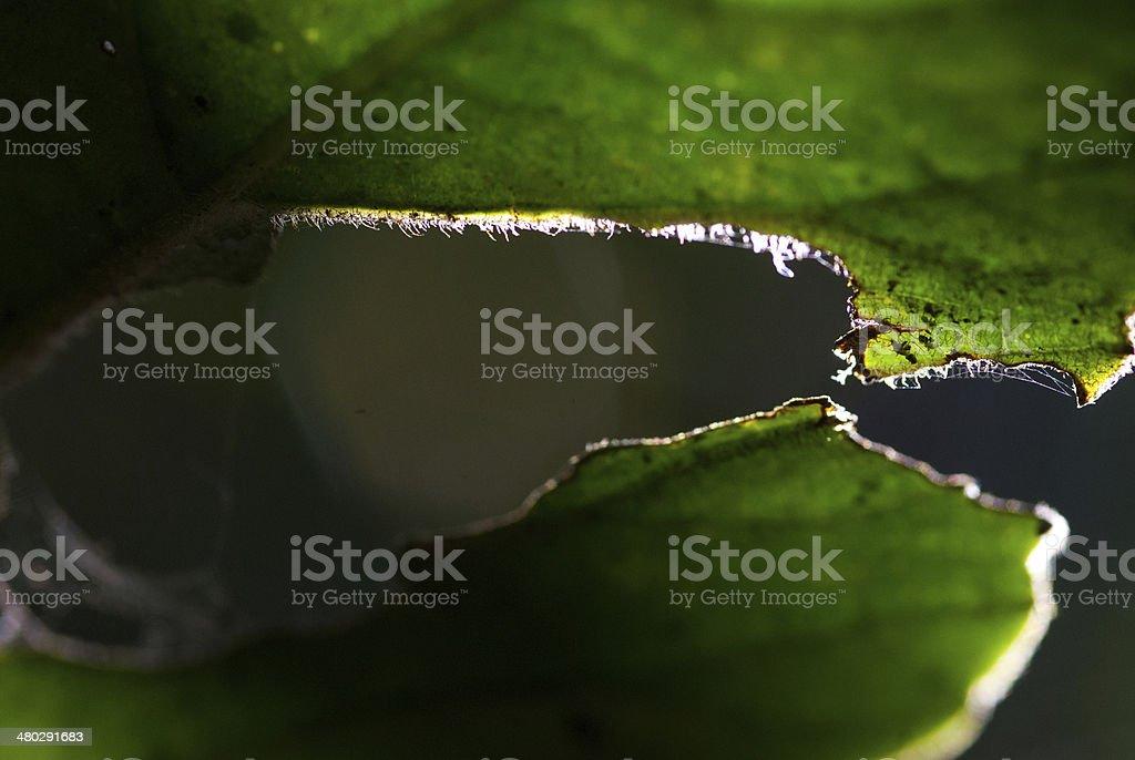 Zielone liście zbiór zdjęć royalty-free