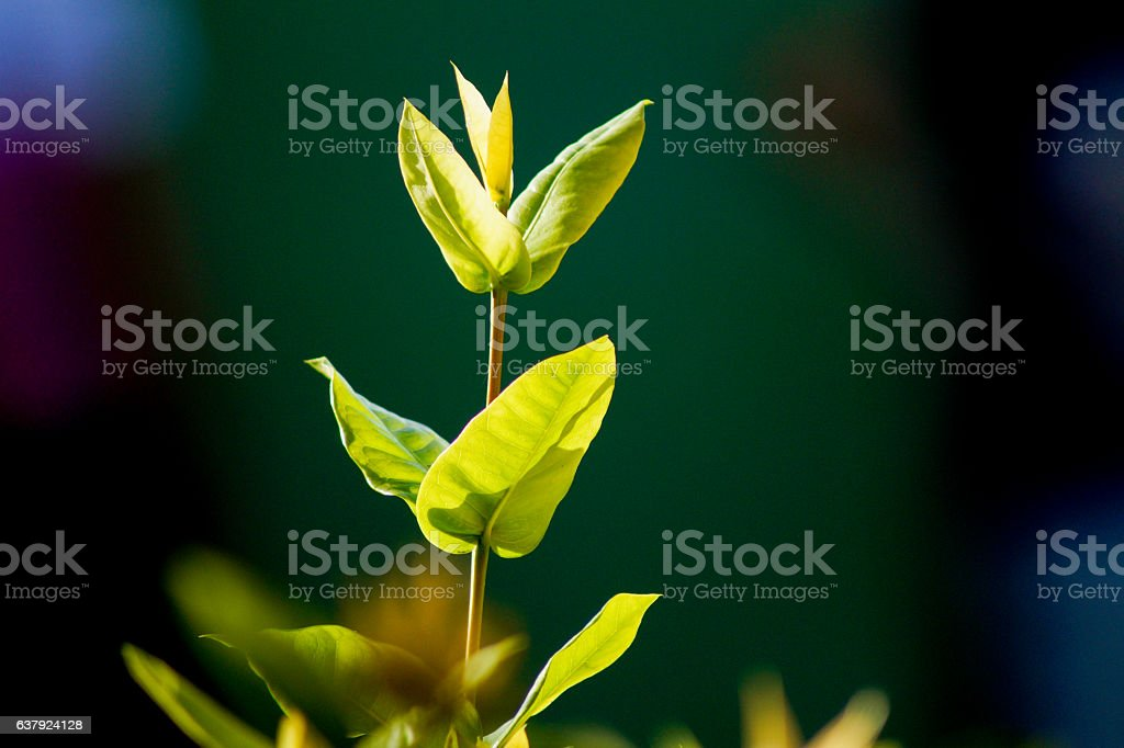 Hojas Verdes stock photo