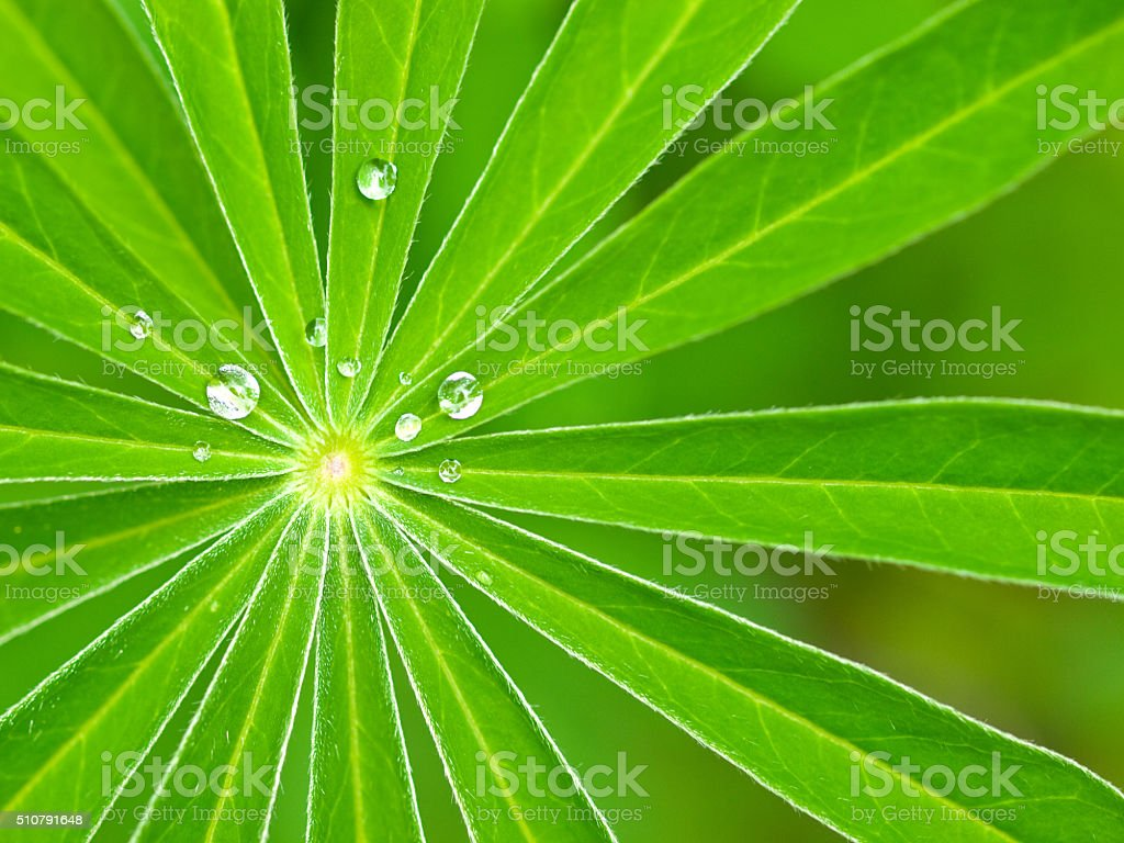 Green Leaves radiating from center with water droplets stock photo