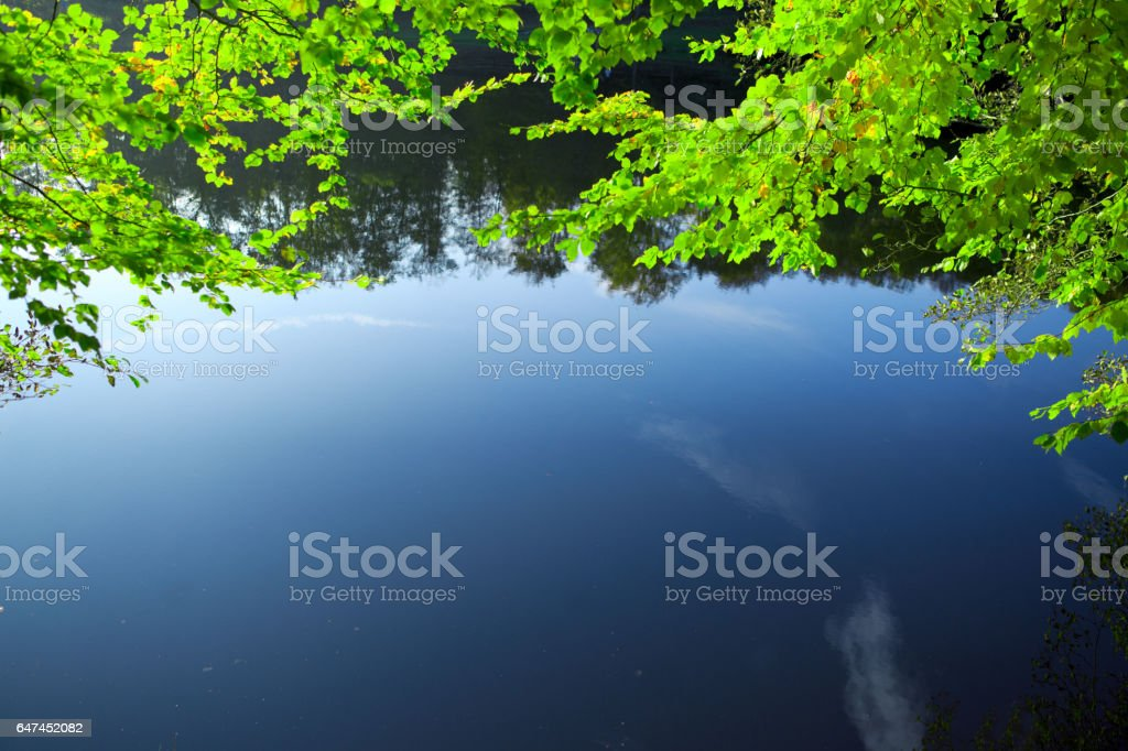 Green leaves reflecting in the water stock photo