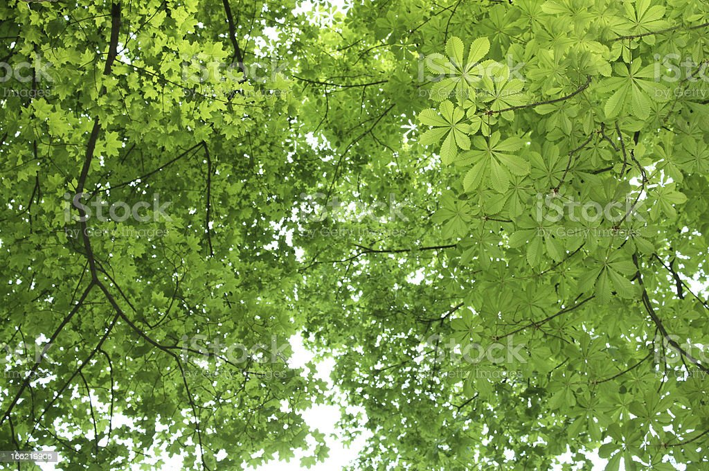 Green  leaves. Spring backgrounds royalty-free stock photo