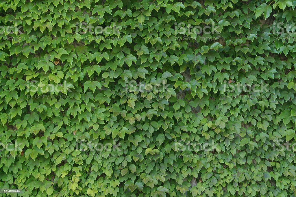 Green Leaves Texture - Fine royalty-free stock photo