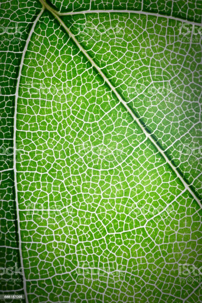 Green leaves texture use as background stock photo