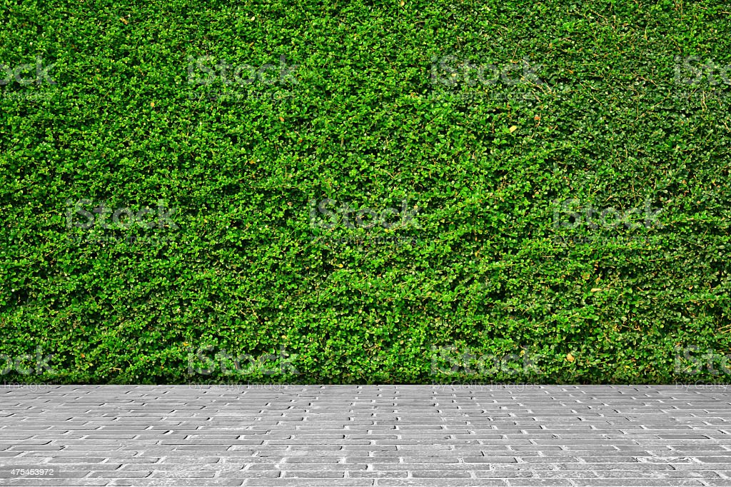Green leaves wall background on gray brick floor. stock photo