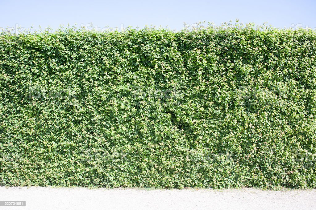 green leaves wall stock photo