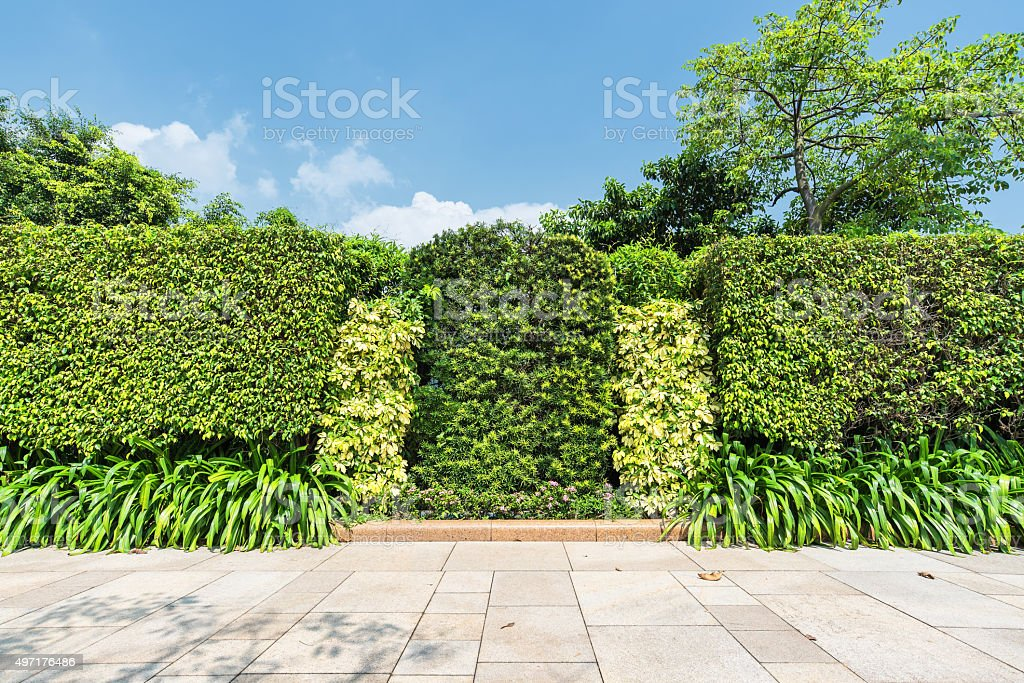 Green leaves wall with stone brick pavement texture background stock photo
