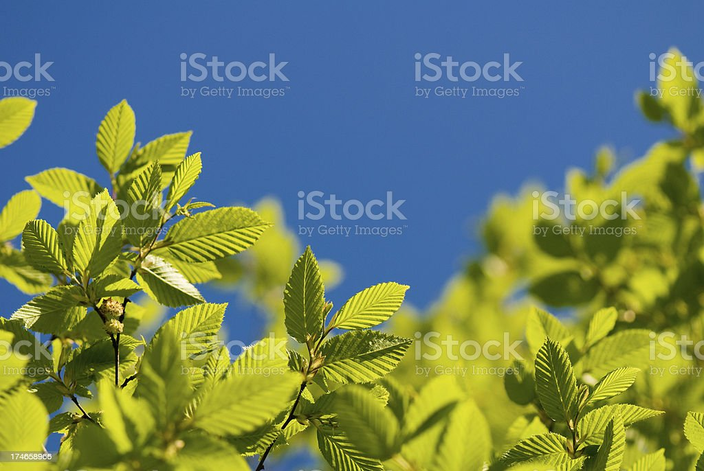Green leaves with a blue sky stock photo