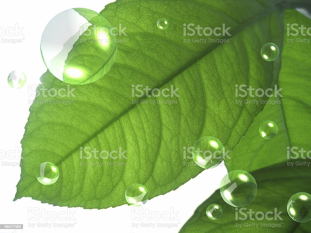 Green leaves with air bubbles royalty-free stock photo