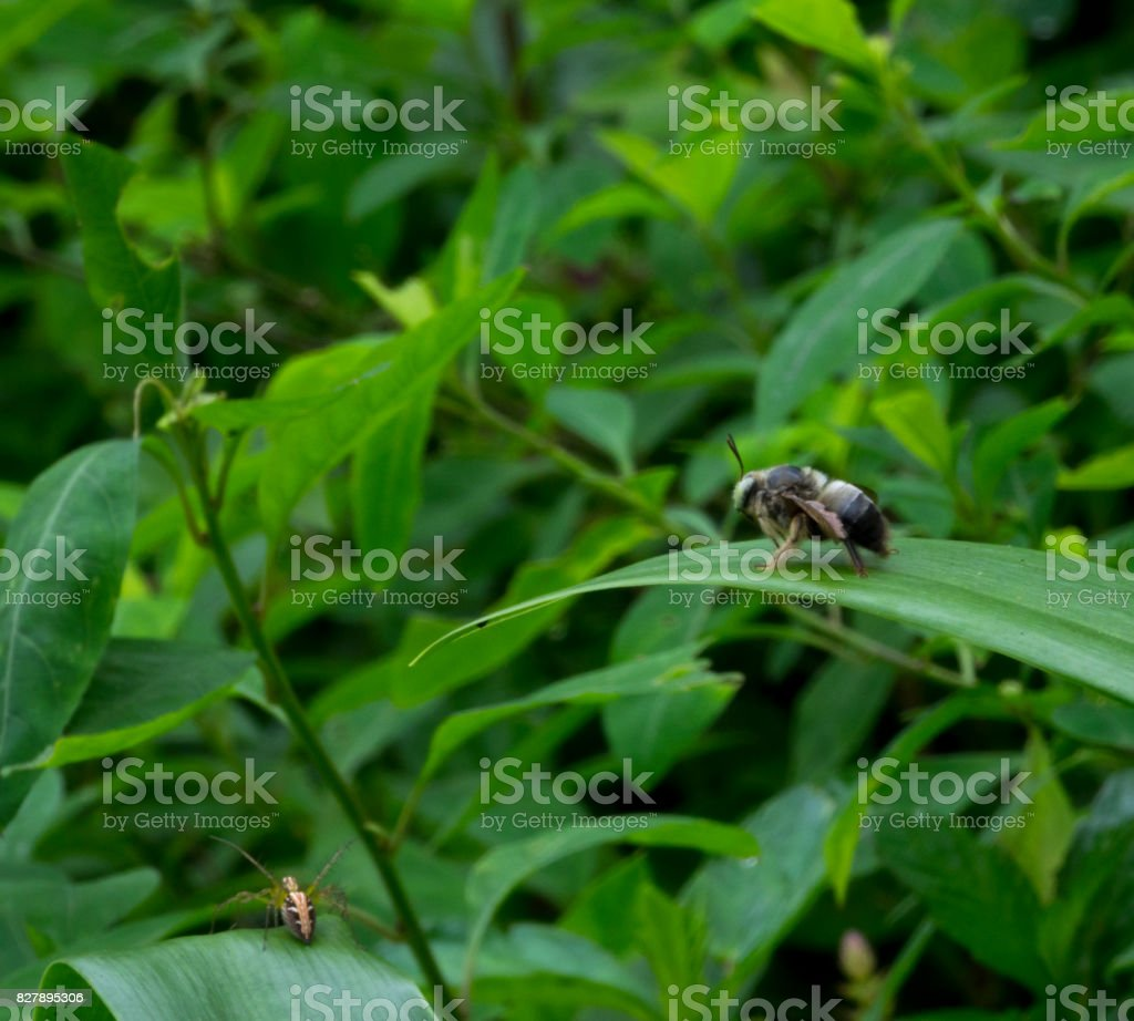 Green leaves with bee and insect stock photo