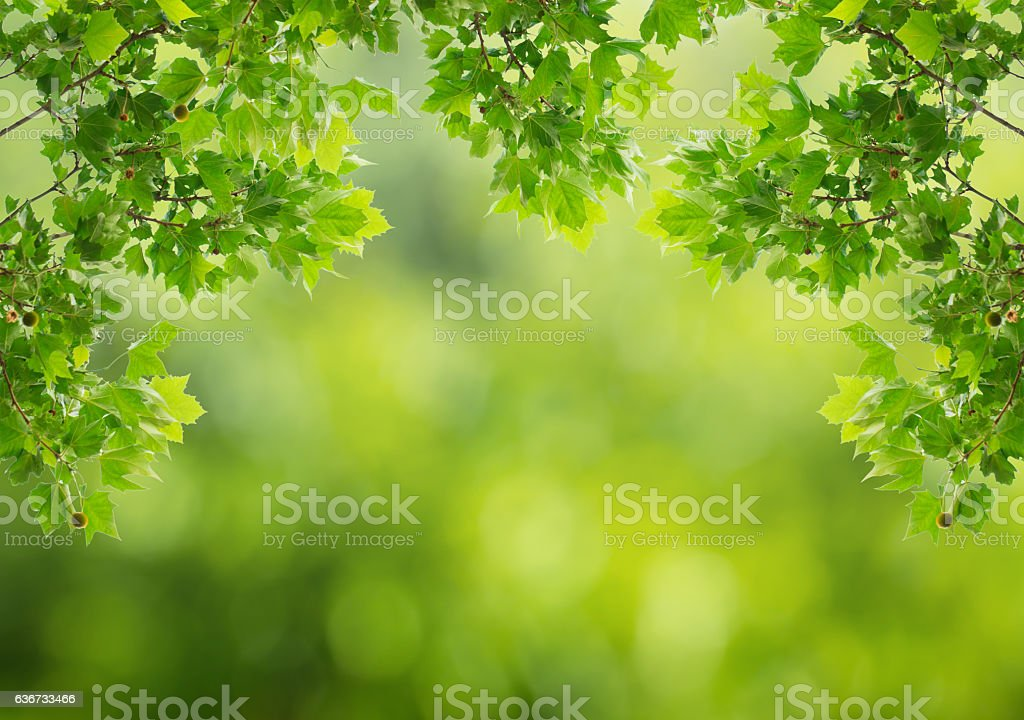 Green leaves with natural blurred background. stock photo