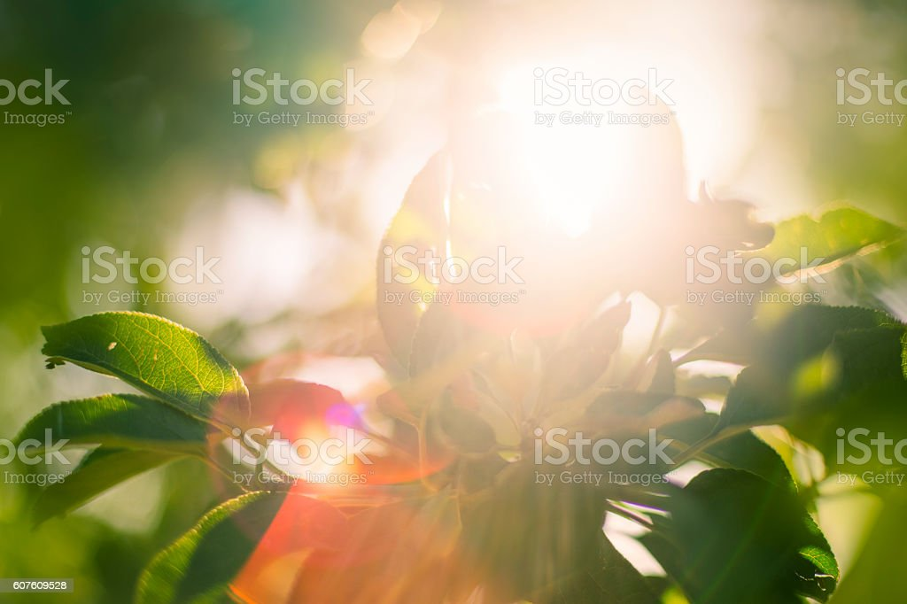 Green leaves with rays of light stock photo
