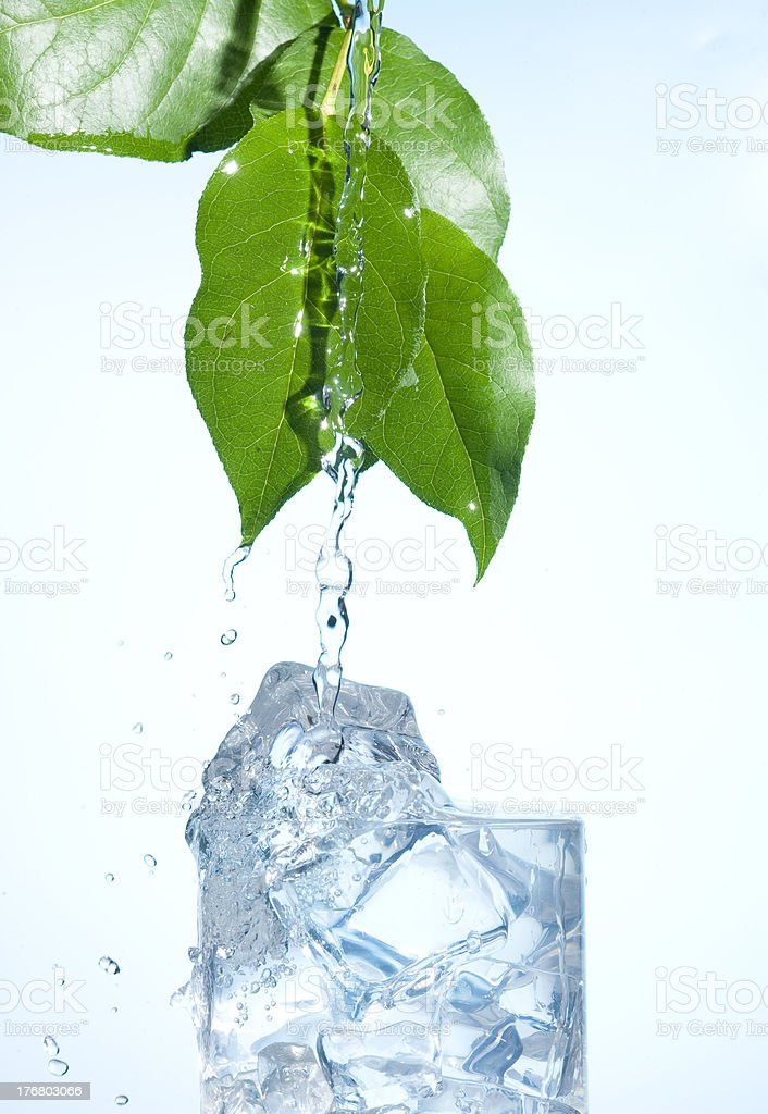 Green leaves with splashing water royalty-free stock photo