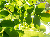 green leaves with sun light