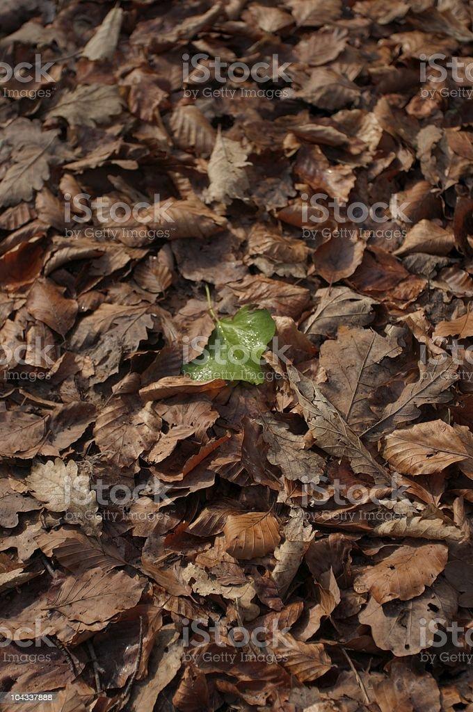 緑の葉に囲まれたブラウンの左 ロイヤリティフリーストックフォト