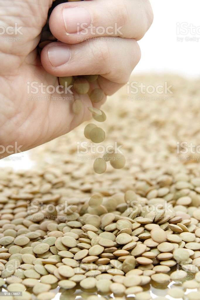 Green Lentils royalty-free stock photo