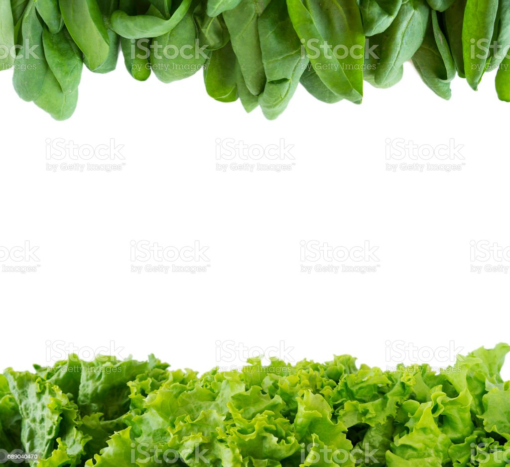 Green lettuce and spinach on a white background. stock photo