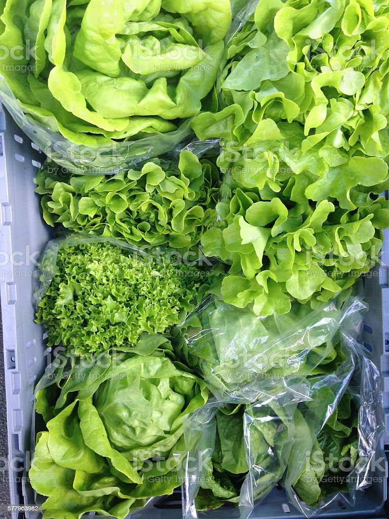 Green lettuce at a farmers market stock photo