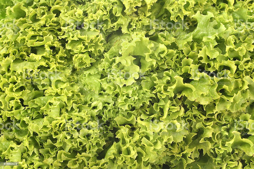 green lettuce background royalty-free stock photo
