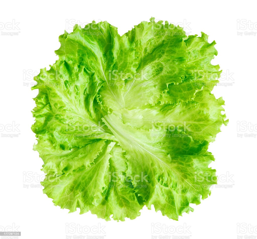 Green lettuce leaf on white background stock photo