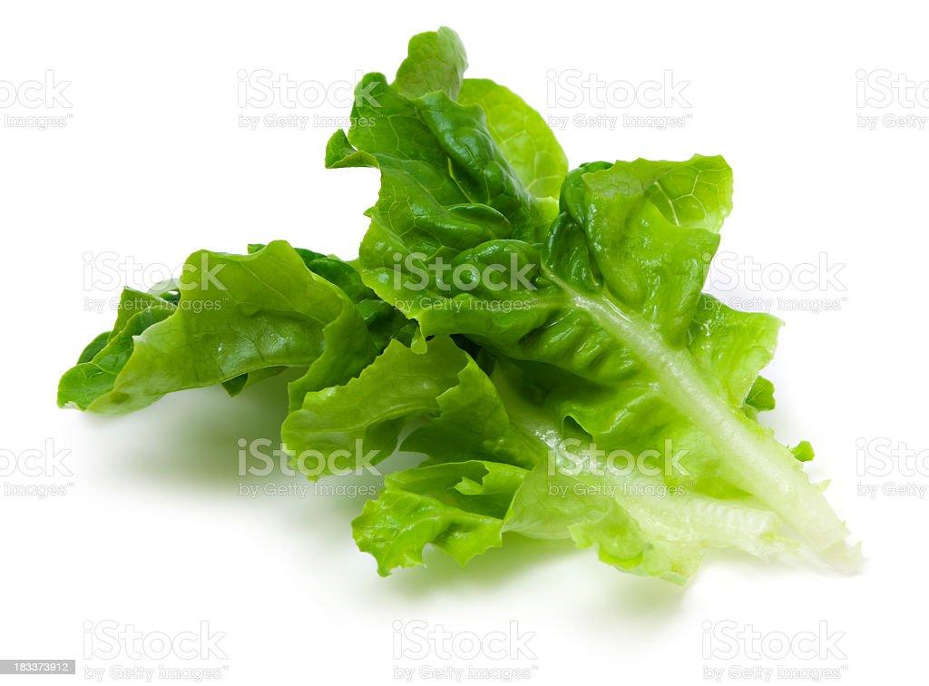 Green lettuce leaf stock photo