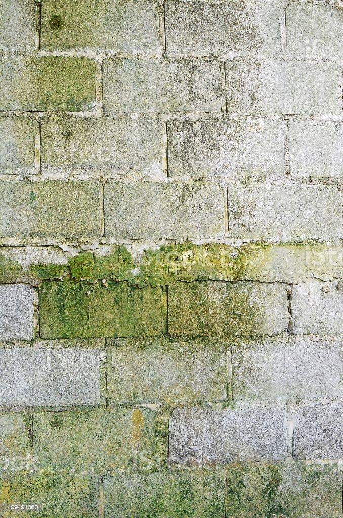 Green lichen on concrete wall background stock photo