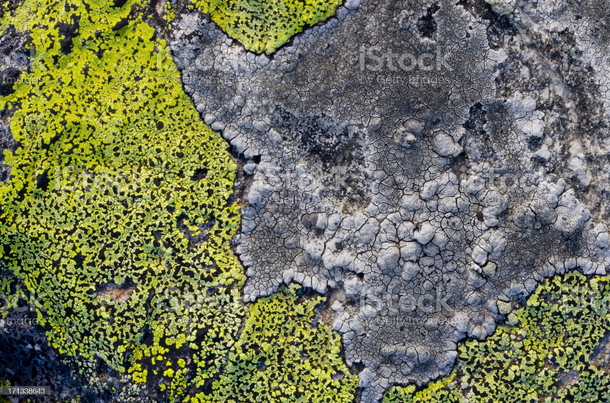 Green Lichen royalty-free stock photo