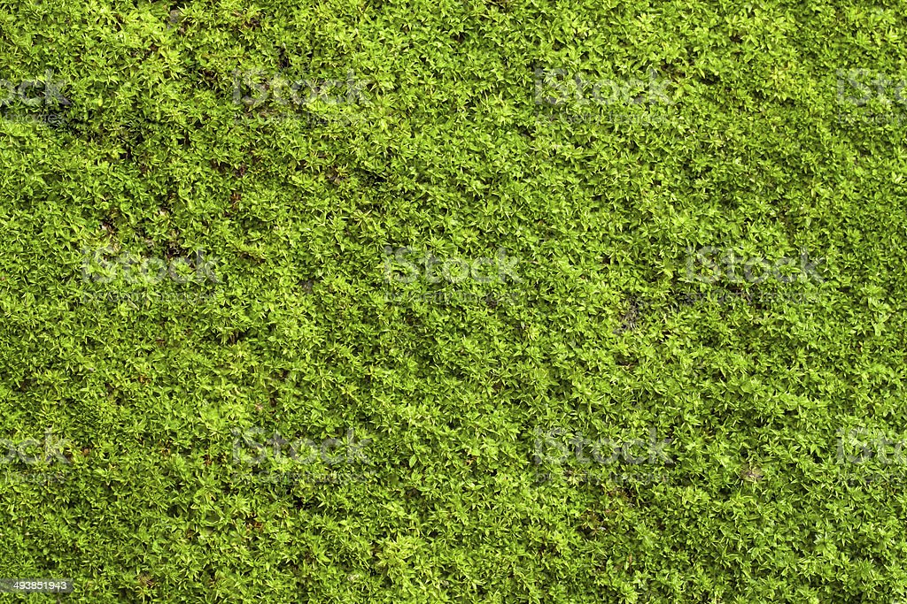 Green lichen stock photo