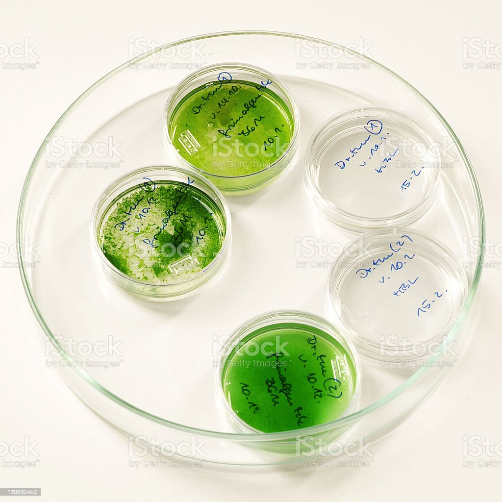green liquids 1 stock photo