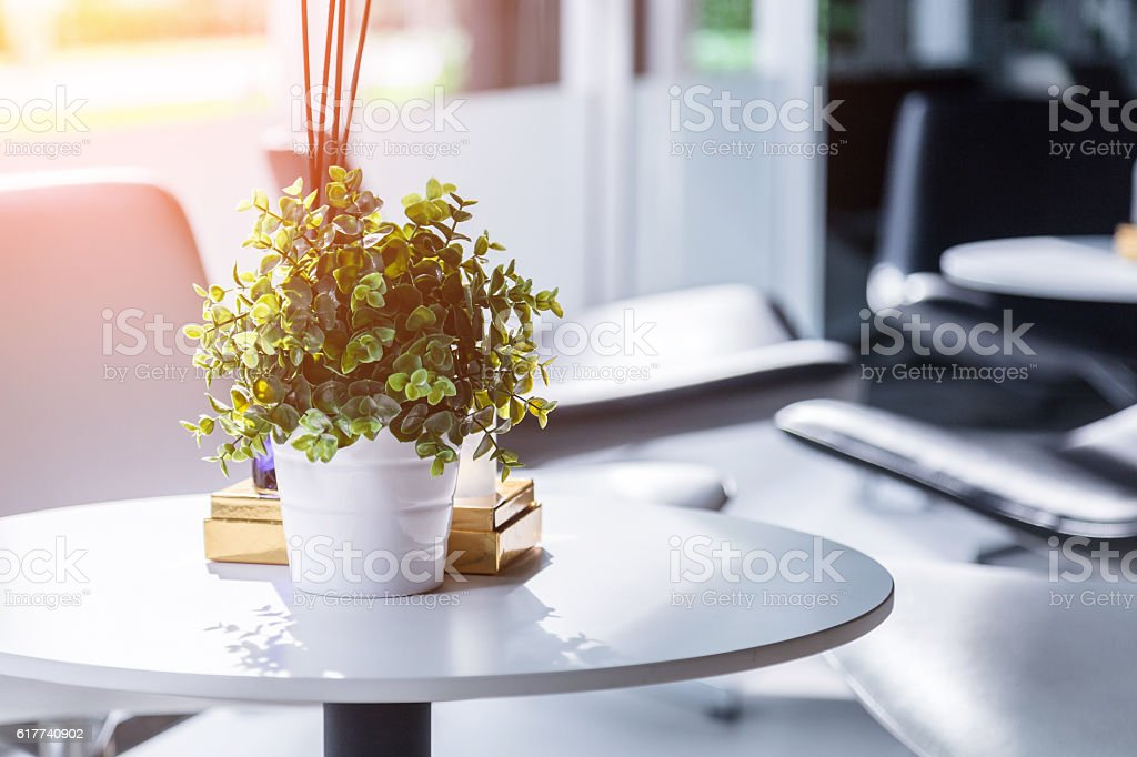 green little tree with white pot on a table stock photo