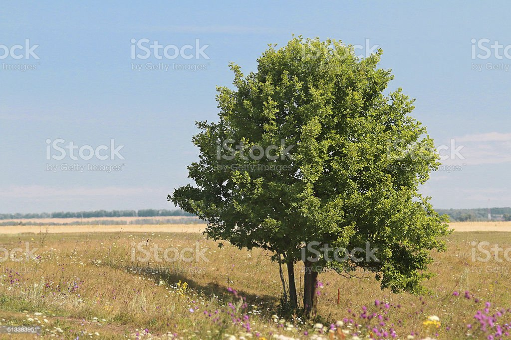 green lonely tree growing in a meadow stock photo