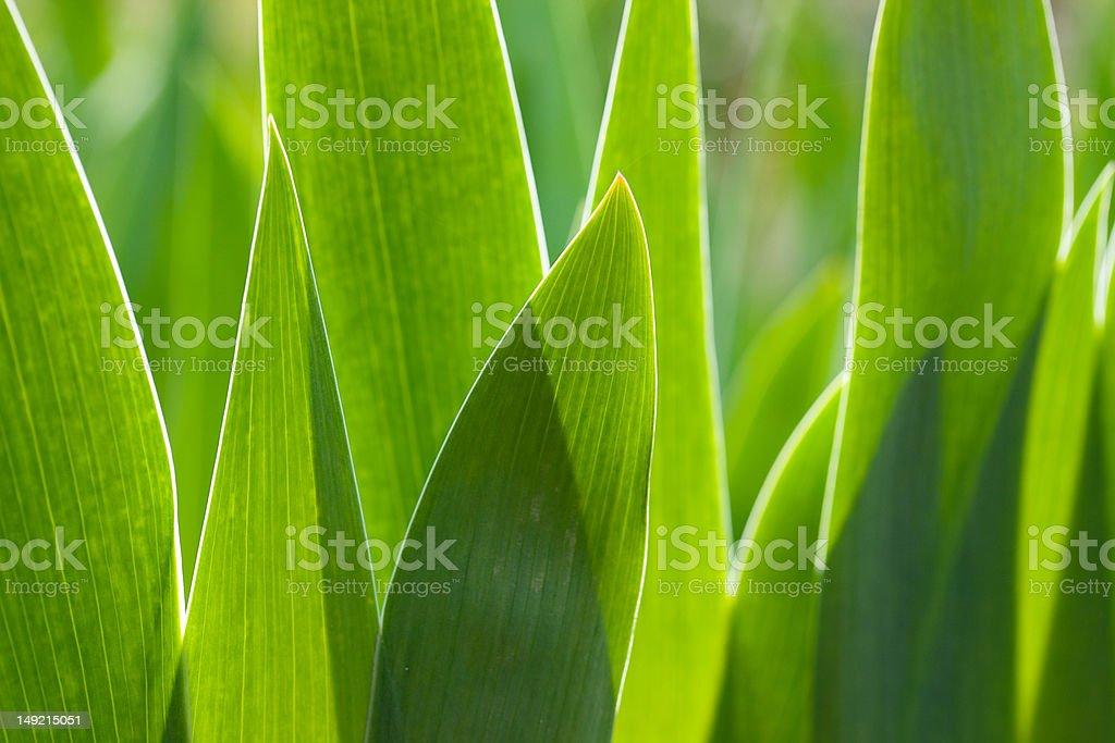 Green lush foliage. royalty-free stock photo