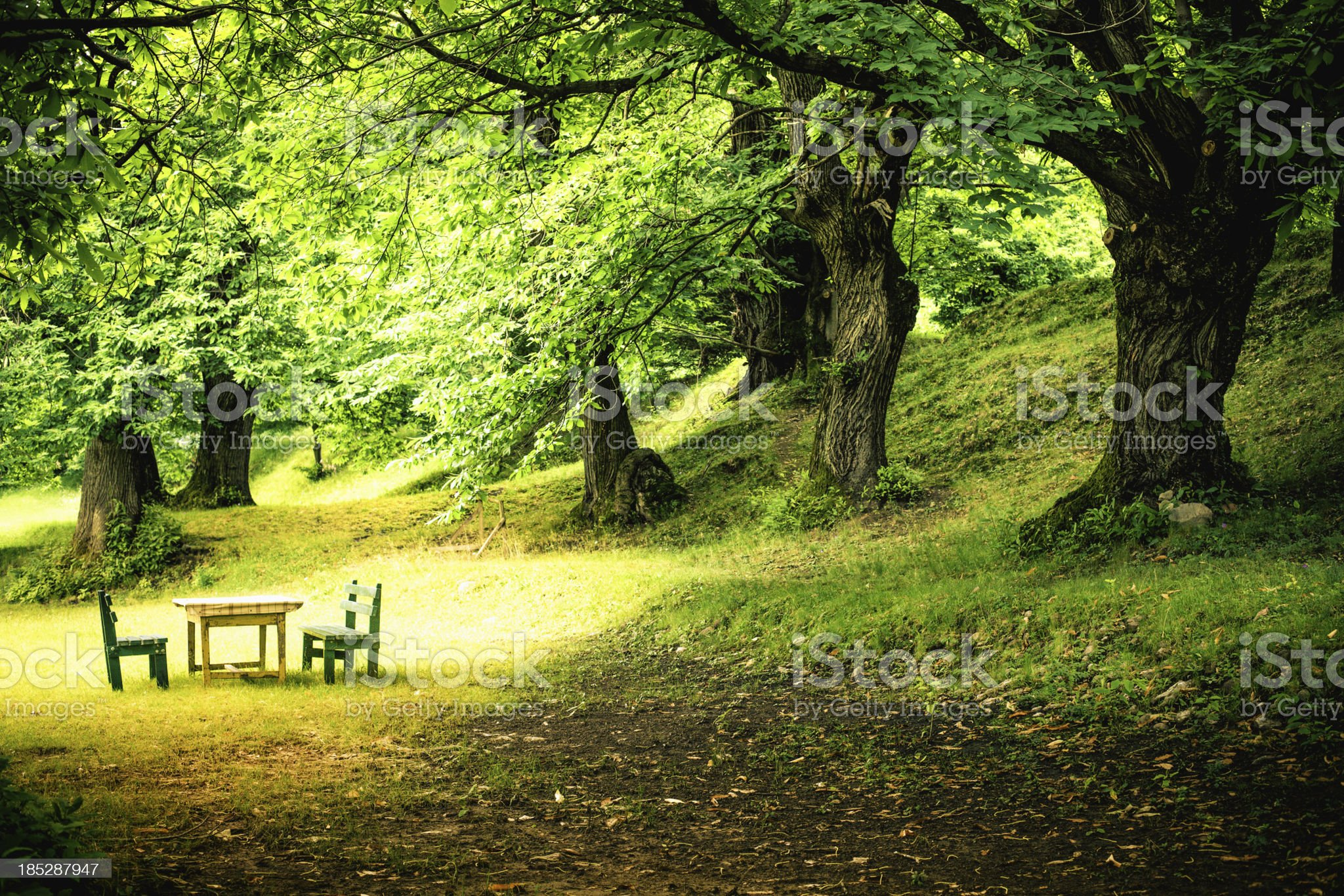 Green Lush Forest and Picnic Table royalty-free stock photo
