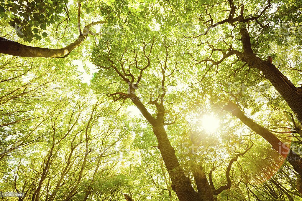 Green Lush Forest and Sun Throught the Leaves stock photo