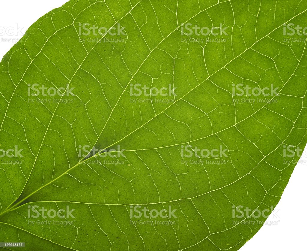 green macro leaf royalty-free stock photo