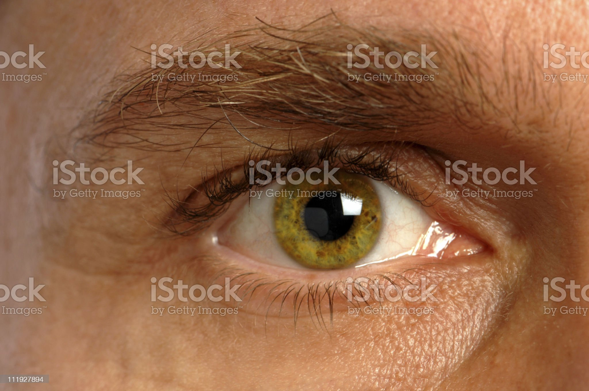 Green Male Eye Close Up royalty-free stock photo