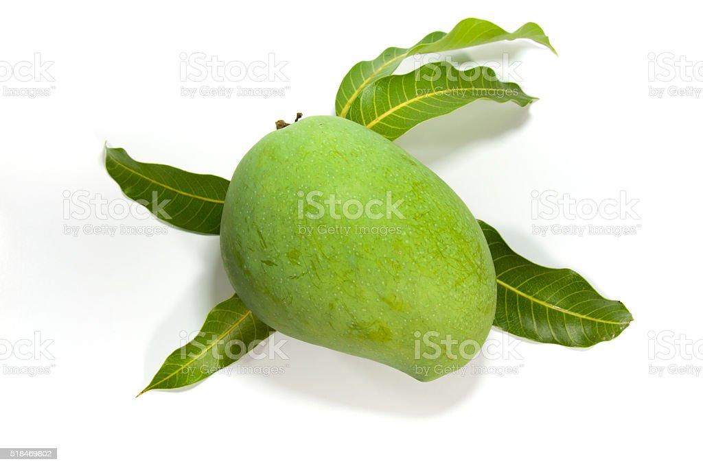 Green mango on white background royalty-free stock photo