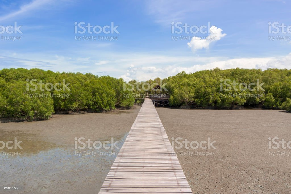 Green mangrove forests stock photo