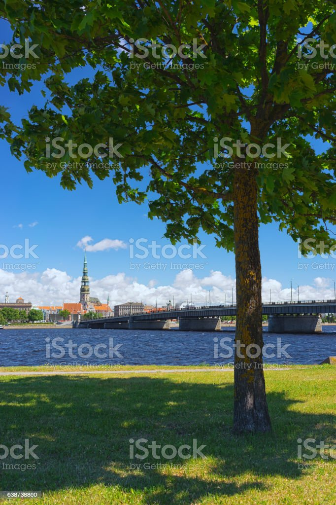 Green maple tree on the background of Riga stock photo