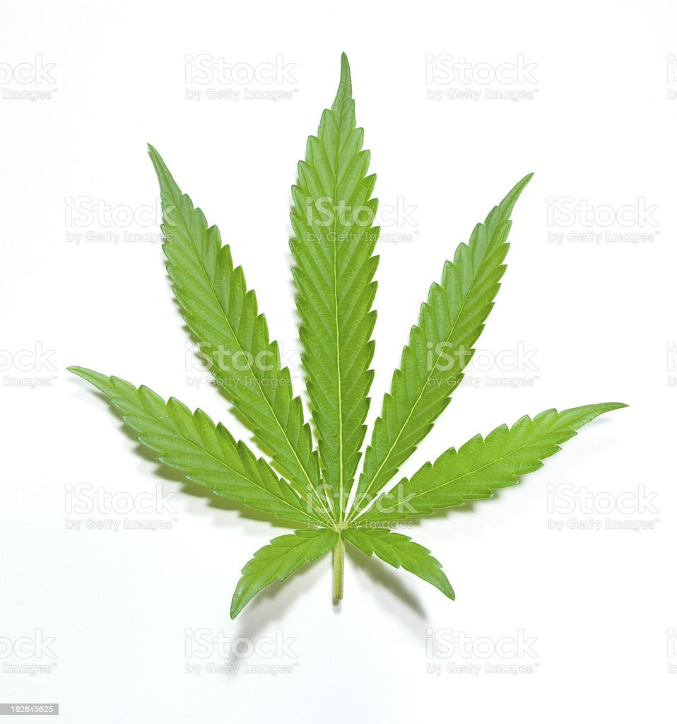 Green Marijuana Leaf royalty-free stock photo