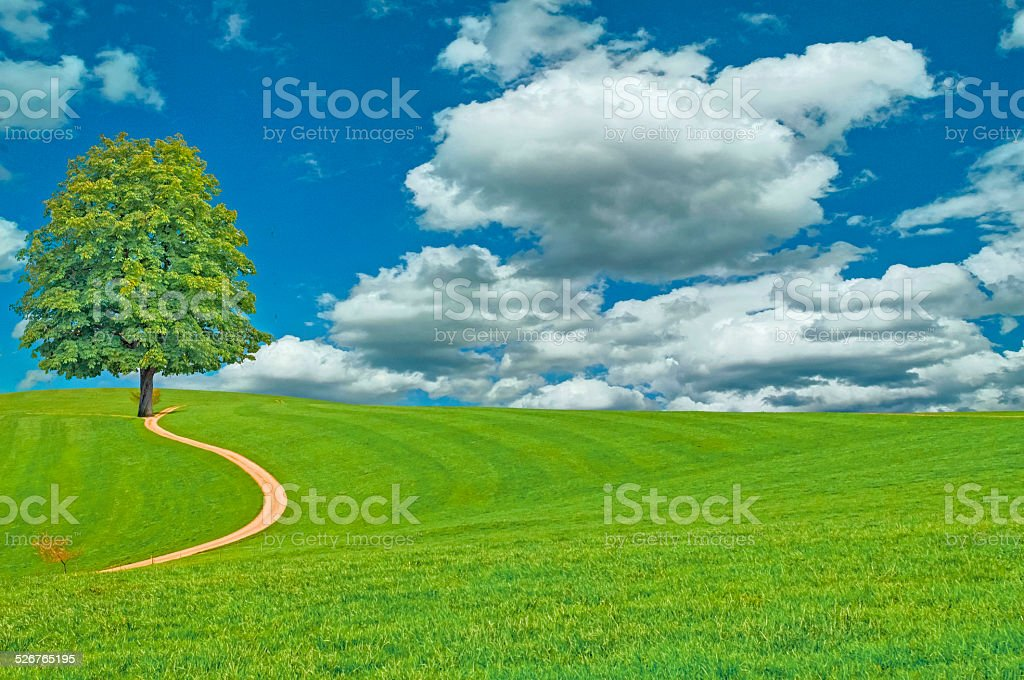 green meadow and a big tree stock photo